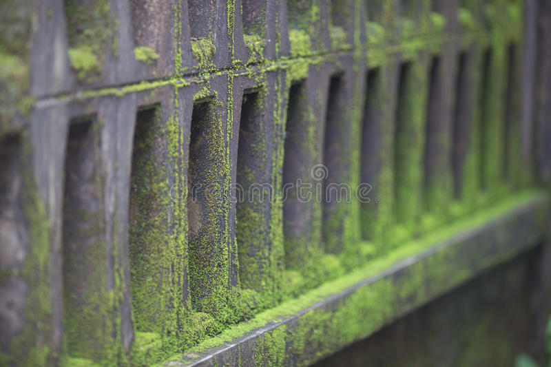 Moss on wall. Green moss on wall in nature royalty free stock image