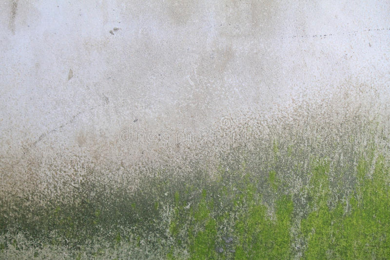 Moss on the wall. Of texture background royalty free stock photo