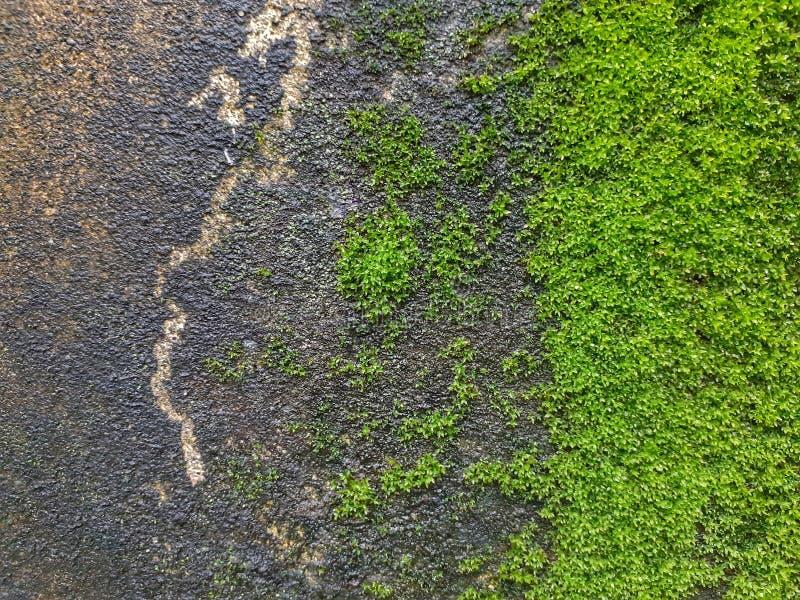 Moss On The Wall verde fotografia stock