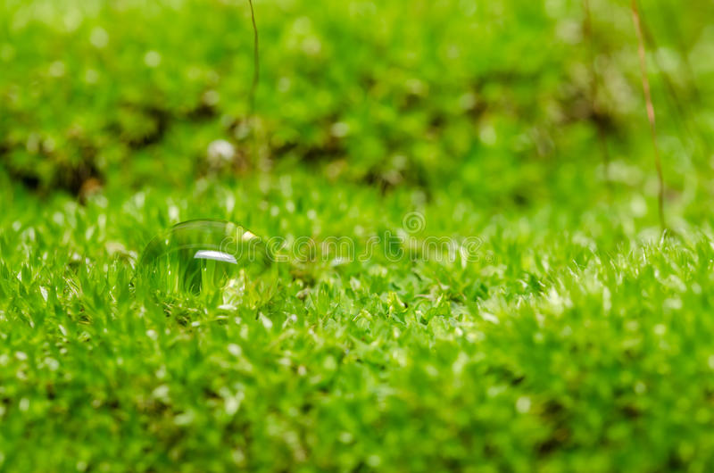 Download Moss and water drops stock photo. Image of nature, lush - 39513578