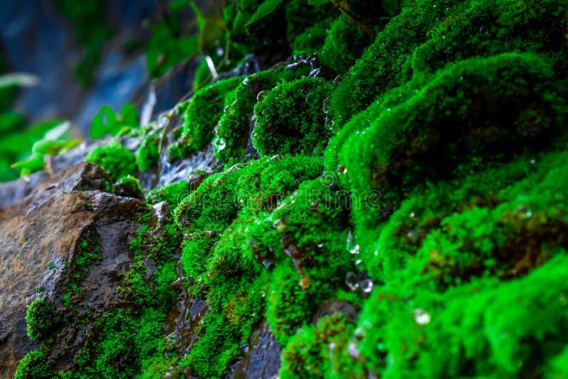Moss Waterfall minúsculo imagem de stock