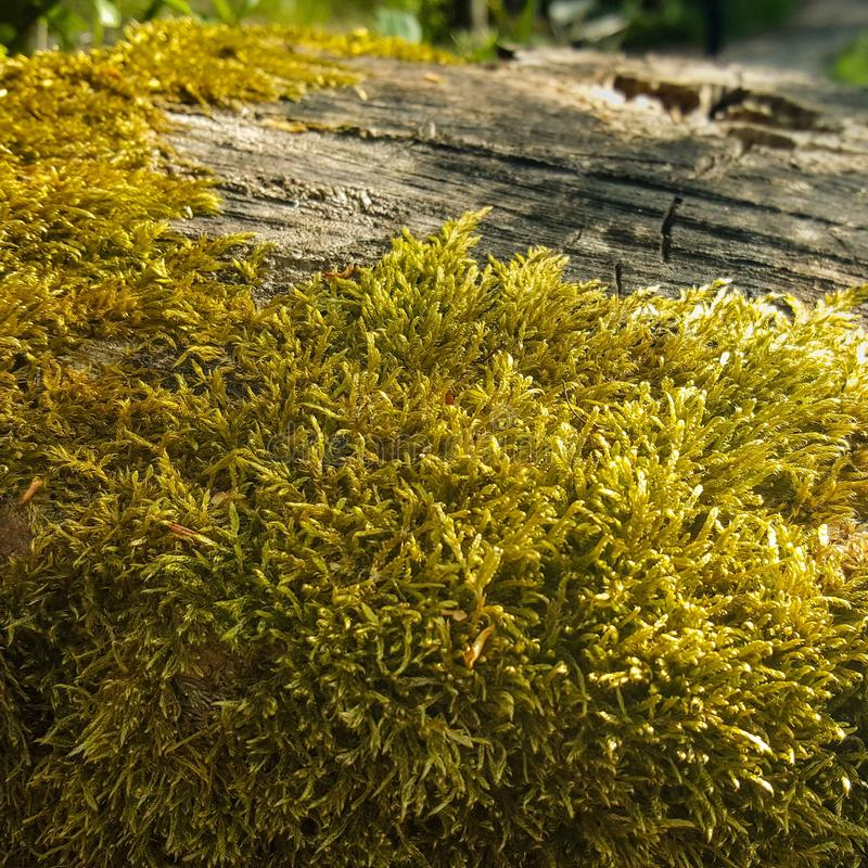 Moss on wood stock photography