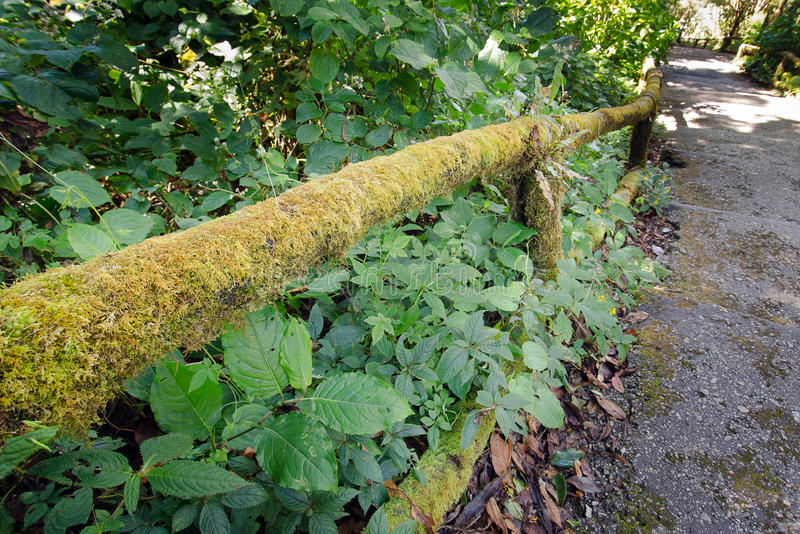 Moss on wooden fence passage in Inthanon mountain Chiangmai Thai stock photography