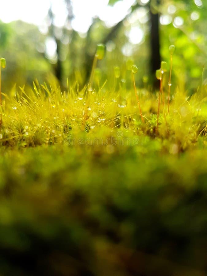 Moss World fotos de archivo