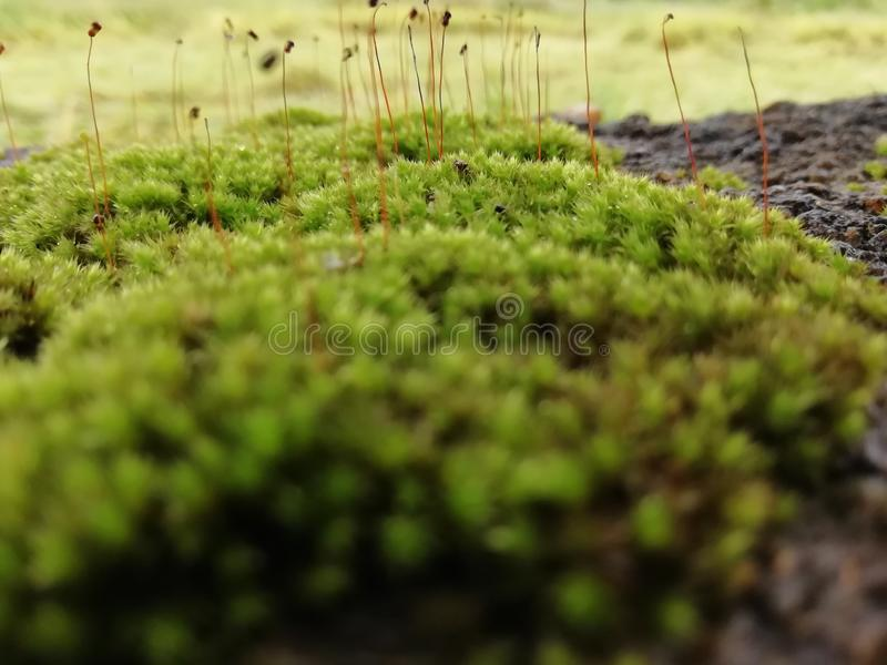 moss zielone zdjęcie royalty free