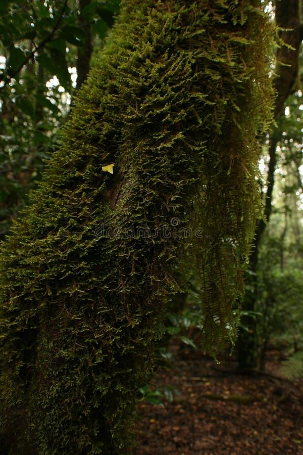 Mossa av grön färg hänger i stammen royaltyfria foton