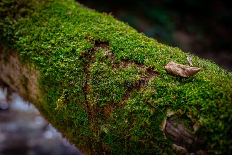 Mossa i ett träd royaltyfri foto