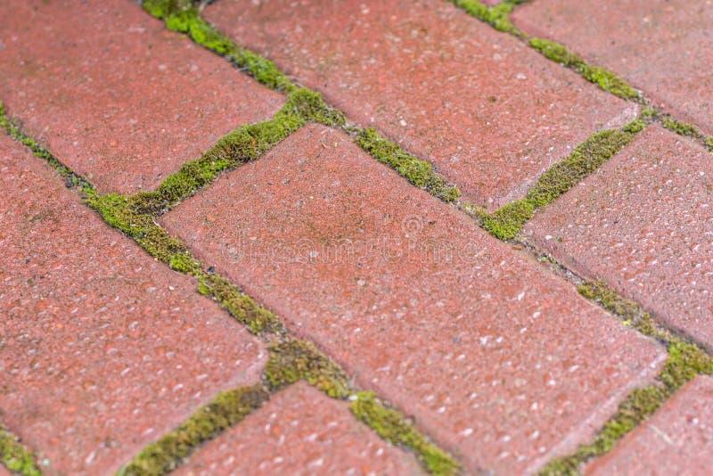 Mossa i skarvarna som en otyg för trädgårdsmästare och husägare royaltyfri foto