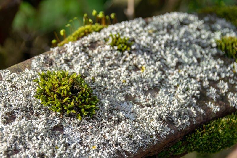 Mossa och lav som växer på kasserade rosta metallhjul arkivfoto