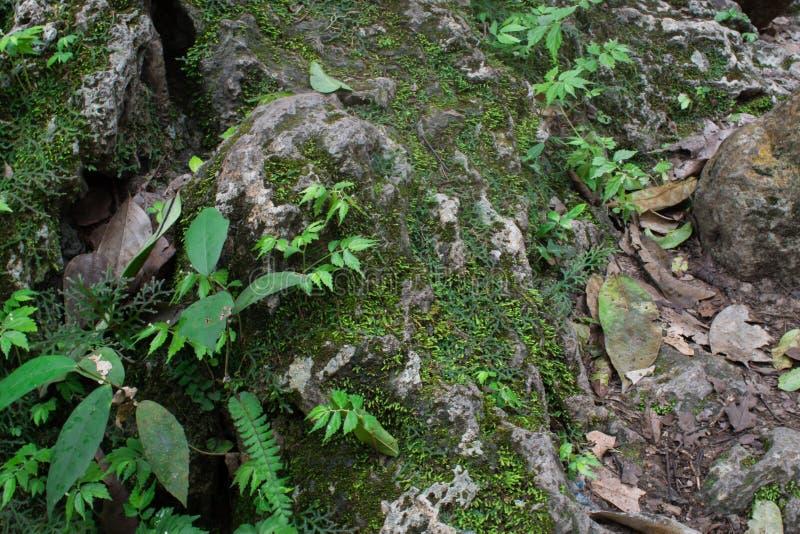 Mossa och sidor på vaggar i den naturliga skogen fotografering för bildbyråer