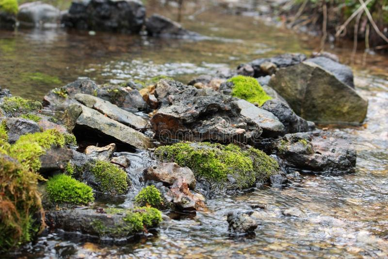 Mossa och stenar fotografering för bildbyråer