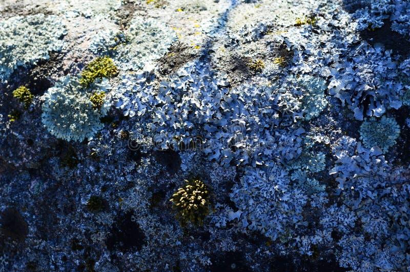 Mossa på en sten vaggar royaltyfria bilder