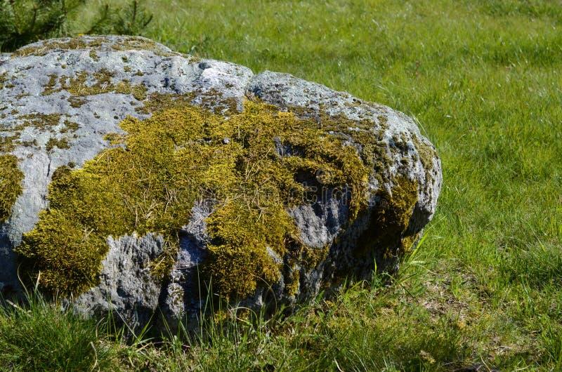 Mossa på en sten vaggar royaltyfria foton