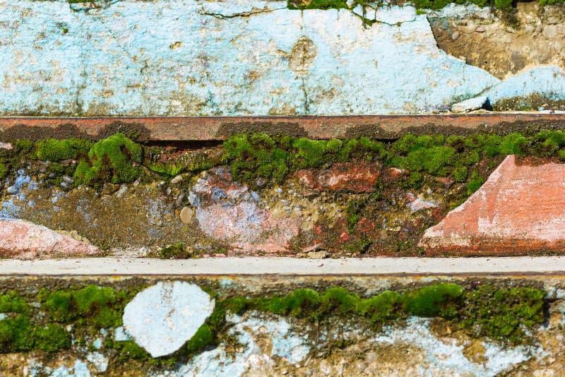 Mossa på gammal trappa fotografering för bildbyråer
