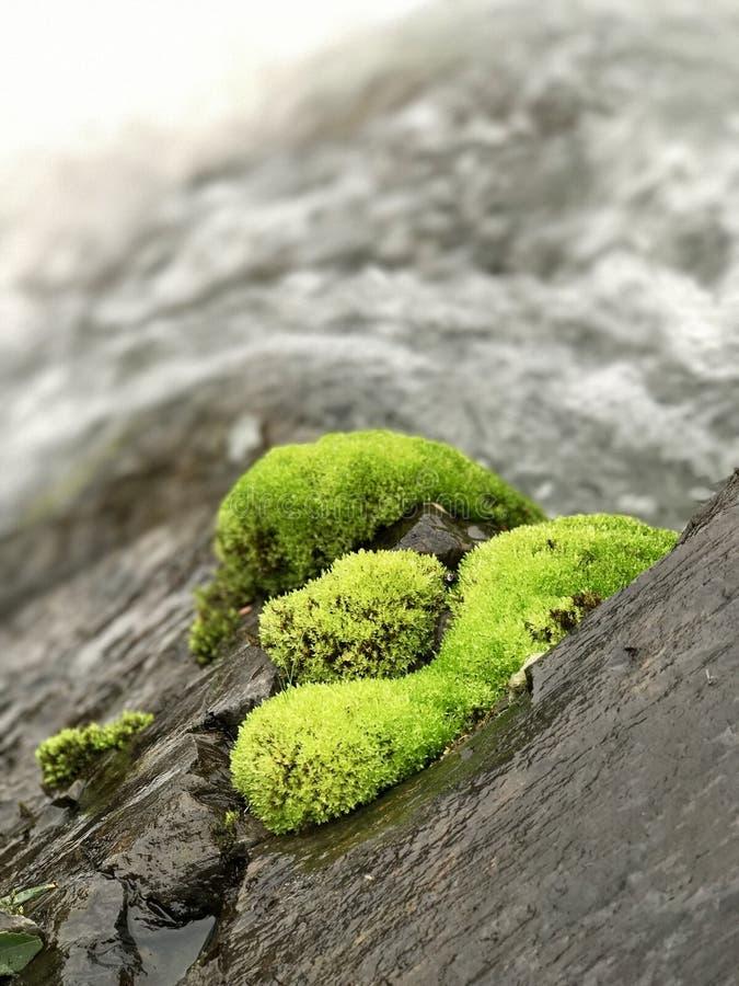 Mossa på kanten av en vattenfall arkivfoto
