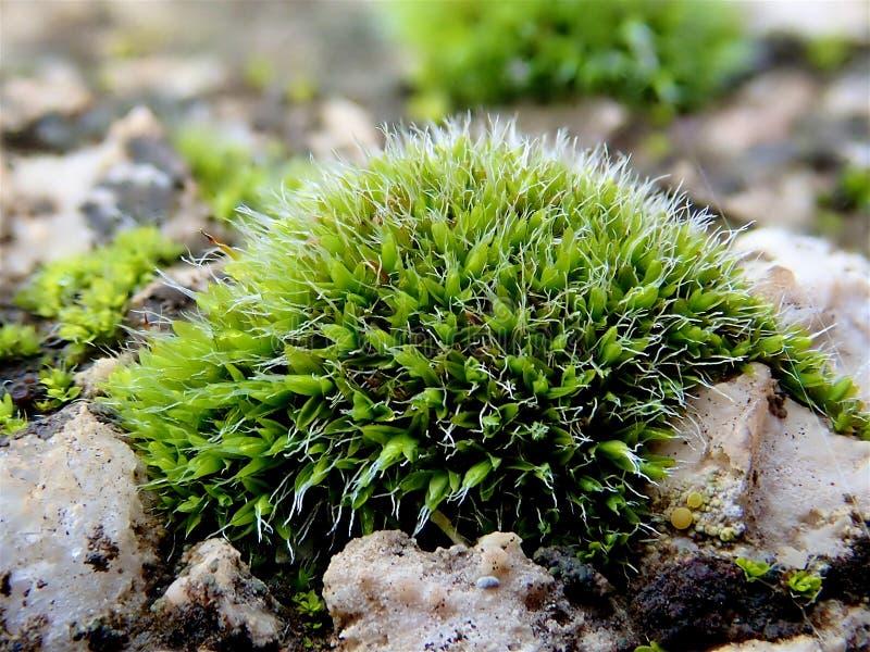 Mossa på stenen av ljust - grön färg fotografering för bildbyråer