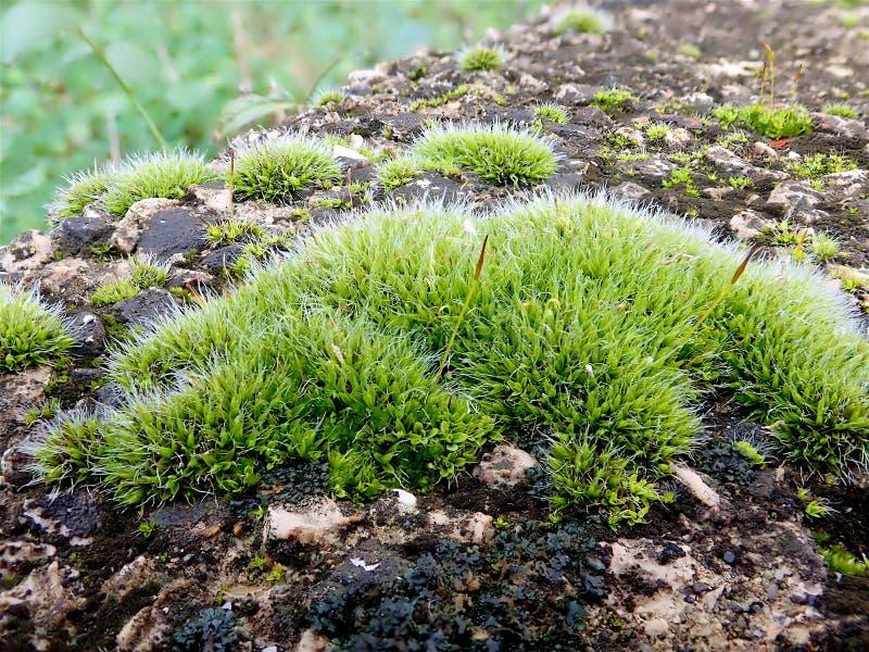 Mossa på stenen av ljust - grön färg arkivbilder