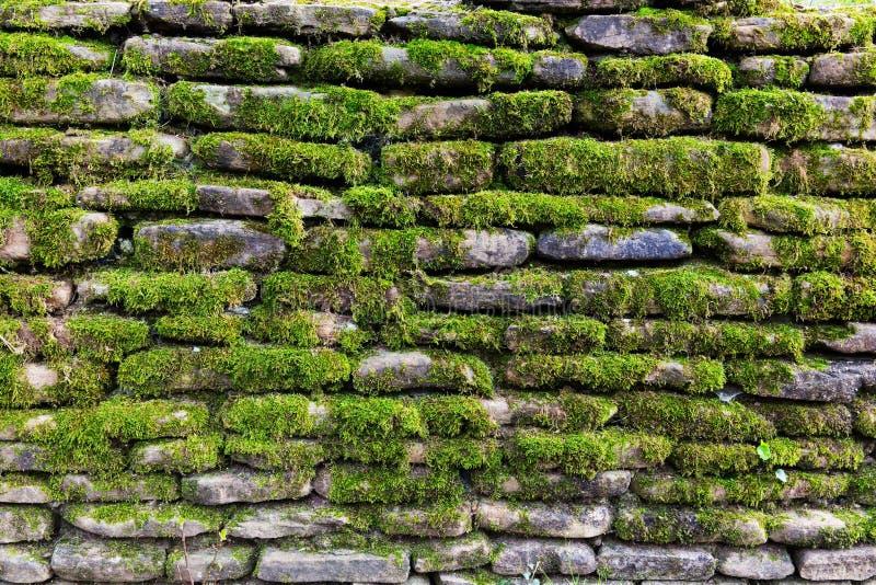 Mossa på stenväggen arkivfoton