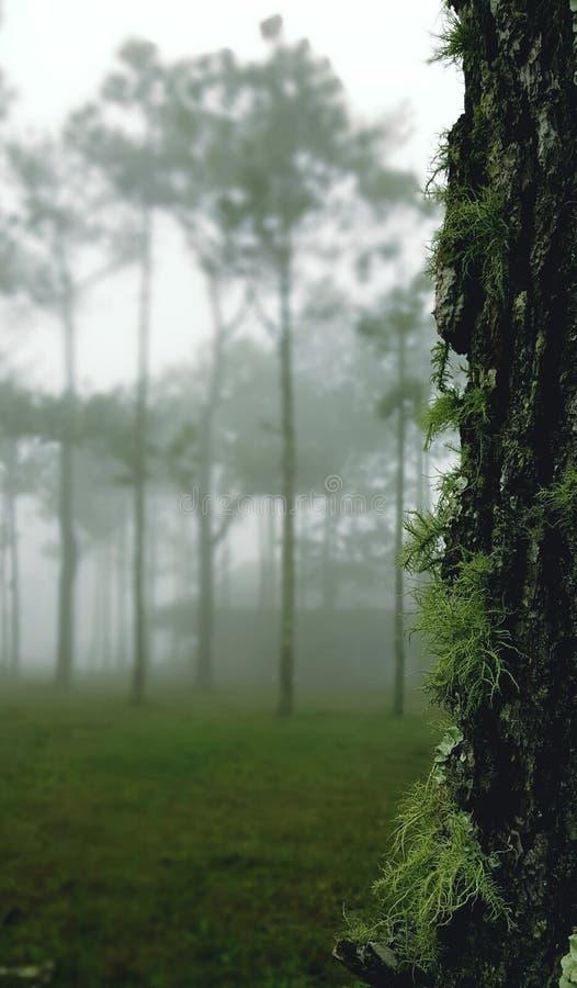 Mossa på träd arkivfoton