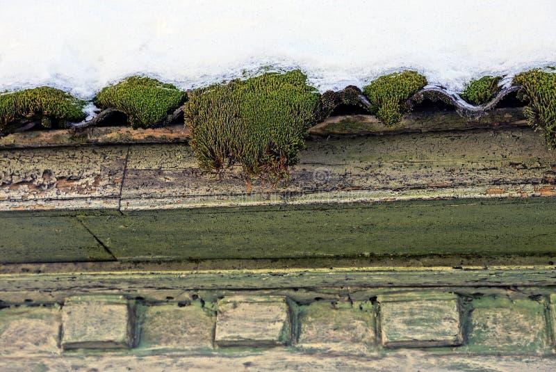 Mossa på väggen under dettäckte taket royaltyfri fotografi
