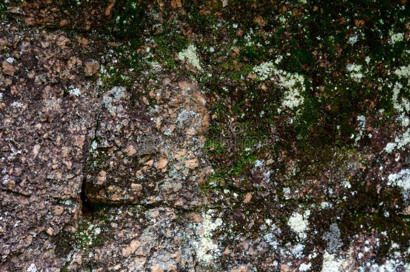Mossa p? en vaggaframsida L?ttnad och textur av stenen med modeller och mossa Naturlig bakgrund f?r sten Sten med moss Stenar royaltyfri fotografi