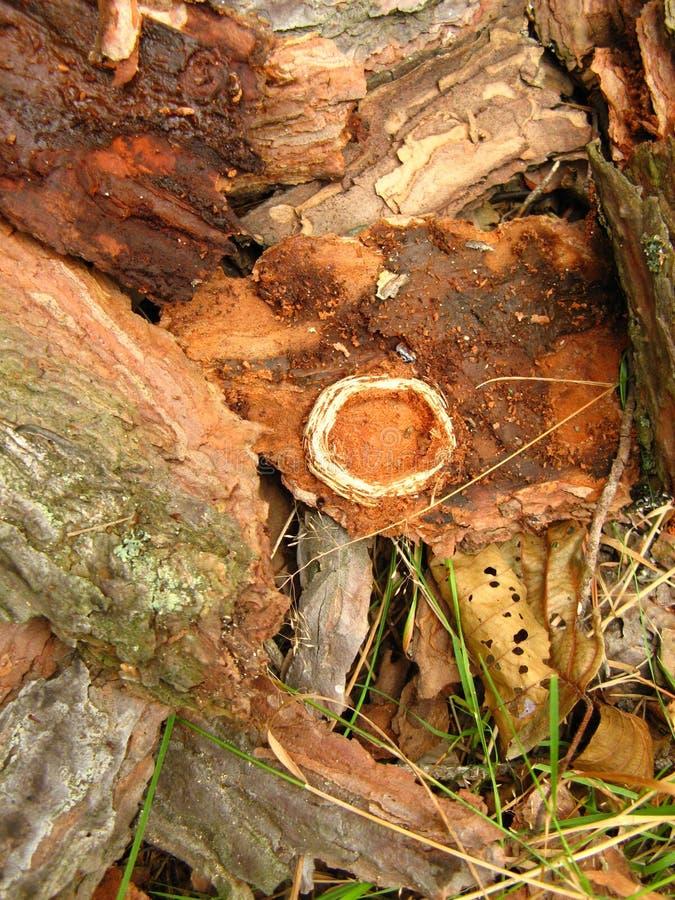 Mossa-skadade träd i snittet arkivfoton