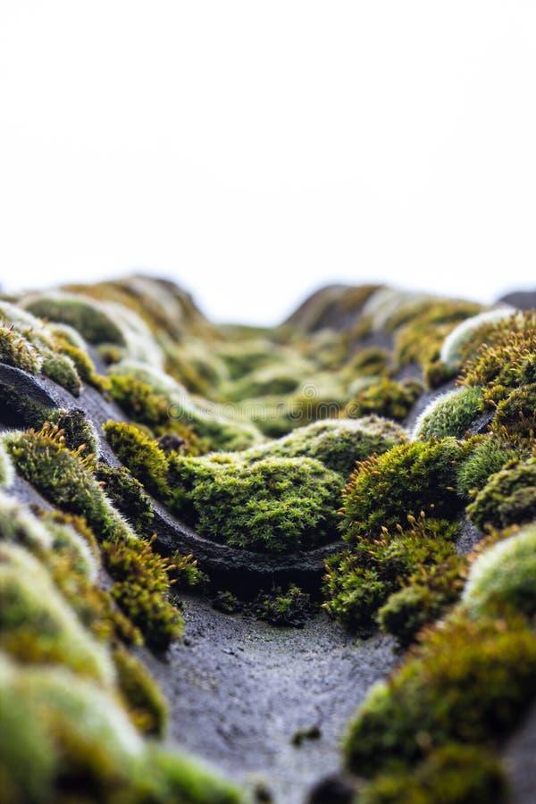 Mossa som den organiska växten på ett gammalt riuntak arkivbild