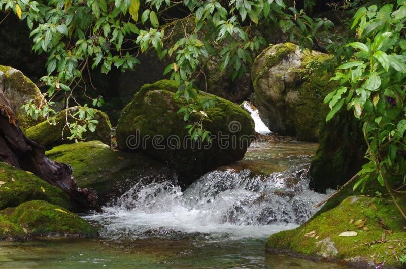 Mossa vatten och vaggar arkivfoto