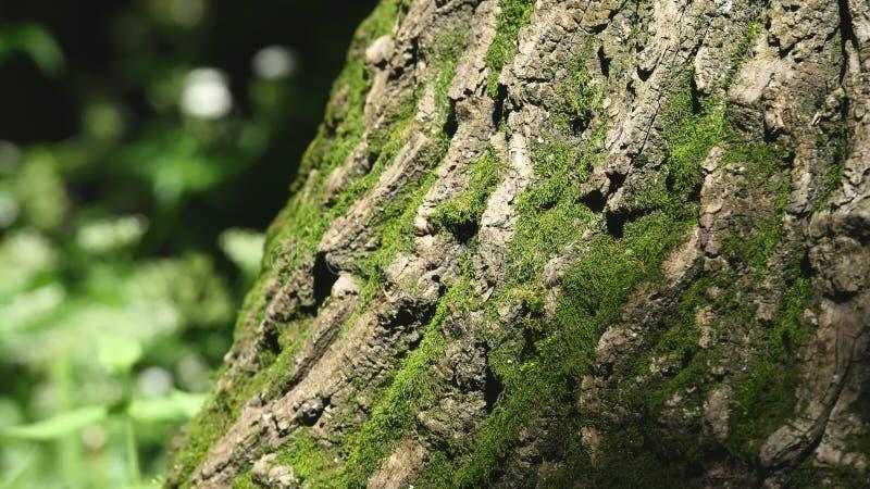 Mossadetalj på skället av ett träd Selektivt fokusera arkivfoton