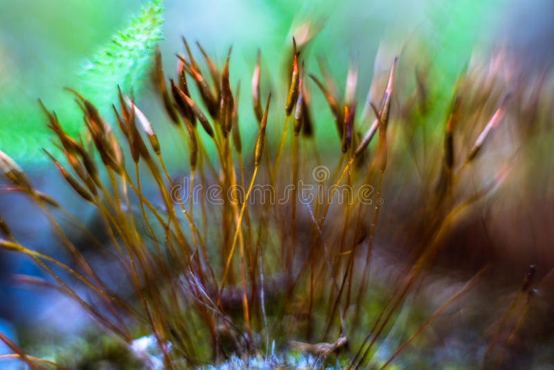 Mossamakro med gräsplan och blåttbokeh och ormbunke fotografering för bildbyråer