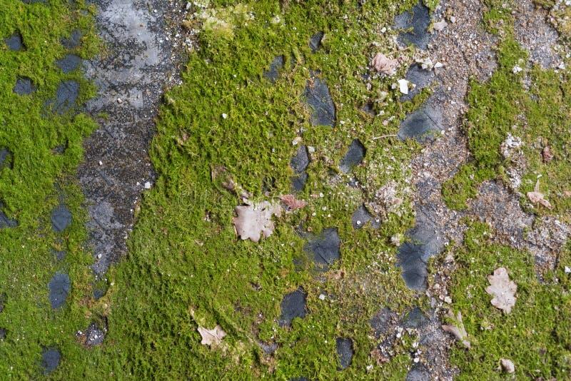 Mossan på det matta gummit royaltyfri foto