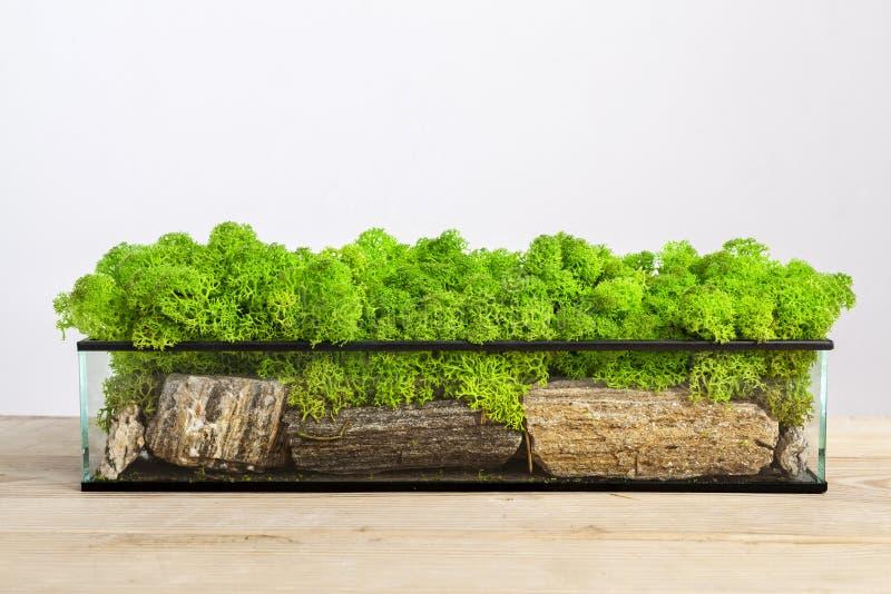 Mossarium - piccole decorazioni in un terrario di vetro fotografia stock libera da diritti