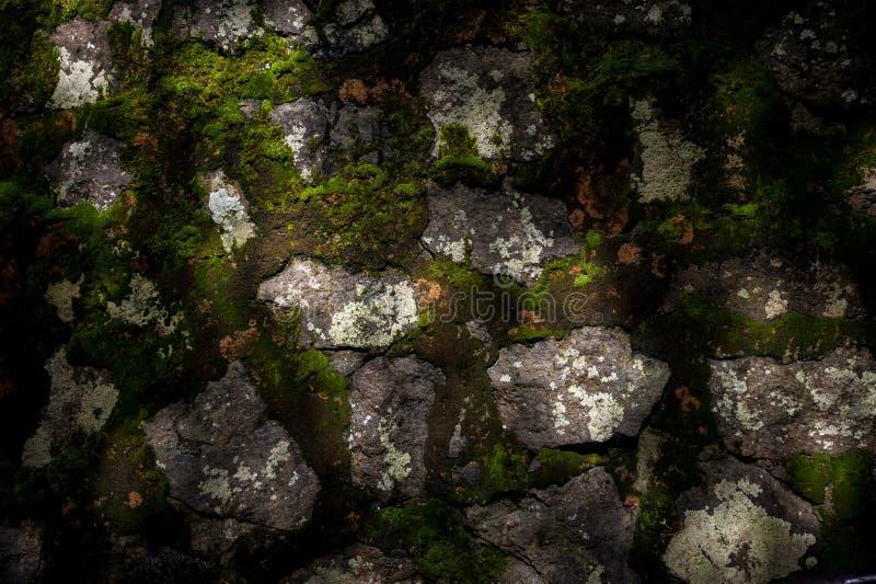 Mossatextur royaltyfria foton