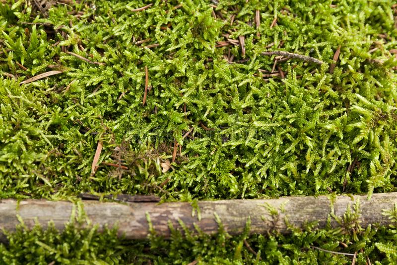 Mossaväggtextur, grön rengräsbakgrund fotografering för bildbyråer