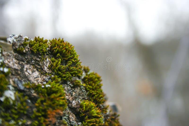 Mossbark royalty-vrije stock fotografie