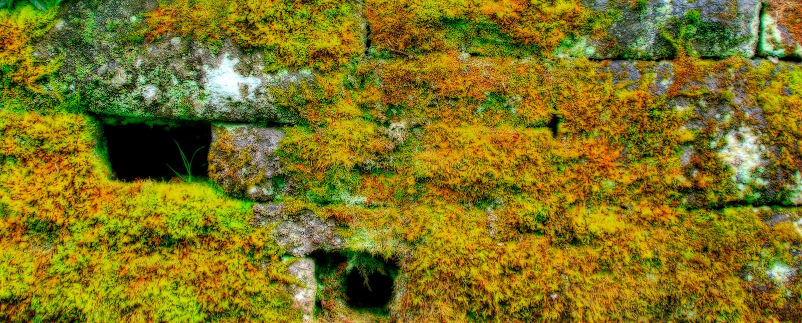 Download Mossed stone wall stock photo. Image of tiles, mossed - 2473632