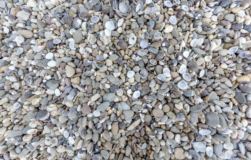 Mosselen en stenen op riverbank royalty-vrije stock fotografie