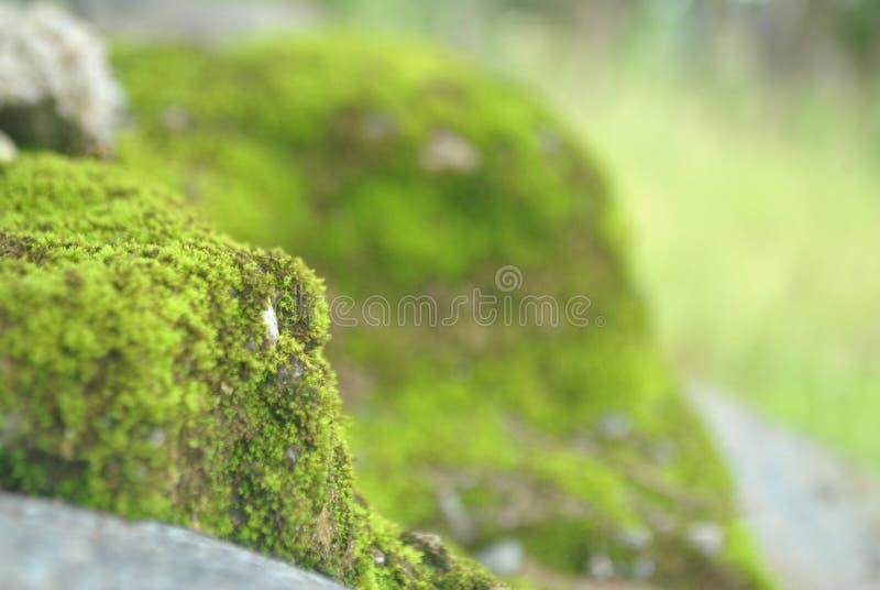 mossen royalty-vrije stock afbeeldingen