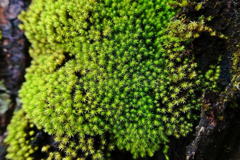 Mossen en korstmossen, tropisch bos stock afbeelding