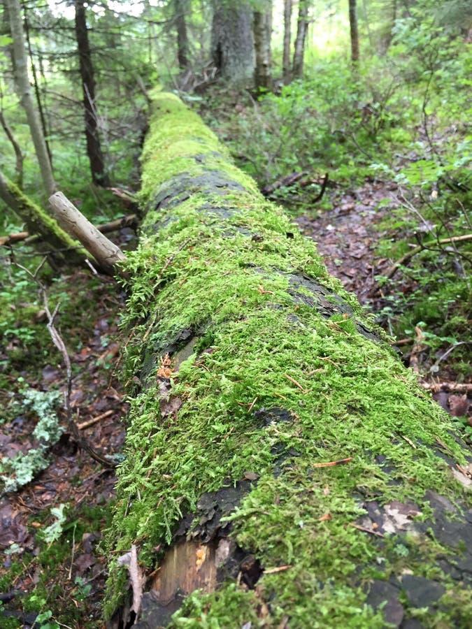 Mossen langs de volledige boom stock afbeelding