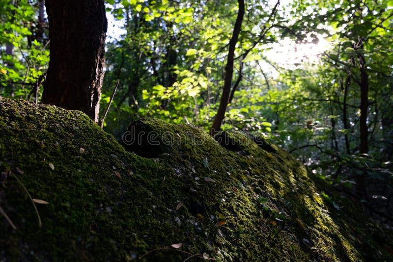 Mossen op Rots stock foto