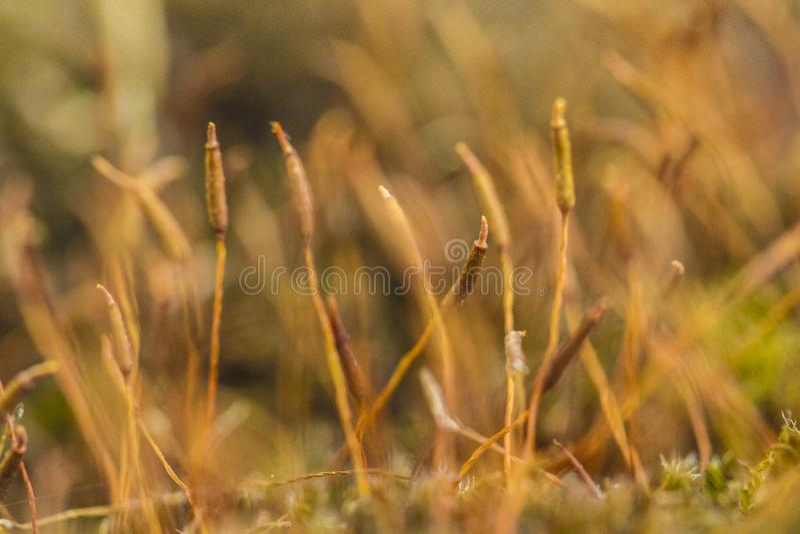 mossen stock afbeelding