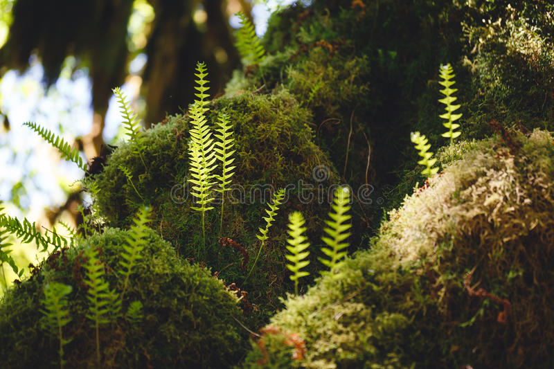 Mosses and Ferns stock image