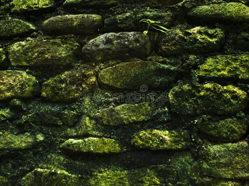 Mossig lantlig textur för foto för closeup för stenvägg Grov stenvägg av forntida byggnad arkivbilder