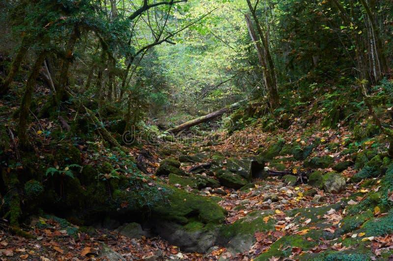 Mossig skog för allhelgonaaftonhöst royaltyfria bilder