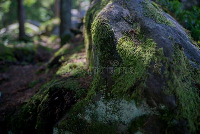 Mossig sten för närbild arkivbilder