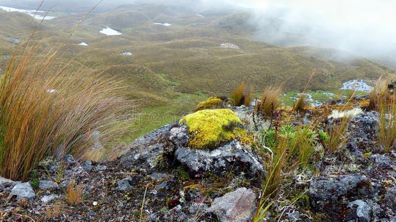 Mossig sten och vegetation som är typiska för paramohögländerna i den Cajas nationalparken arkivfoton