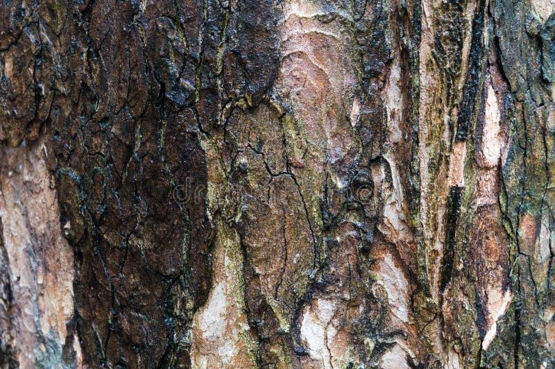 Mossig texturcloseup för gammalt wood skäll, modell för naturlig bakgrund royaltyfria bilder