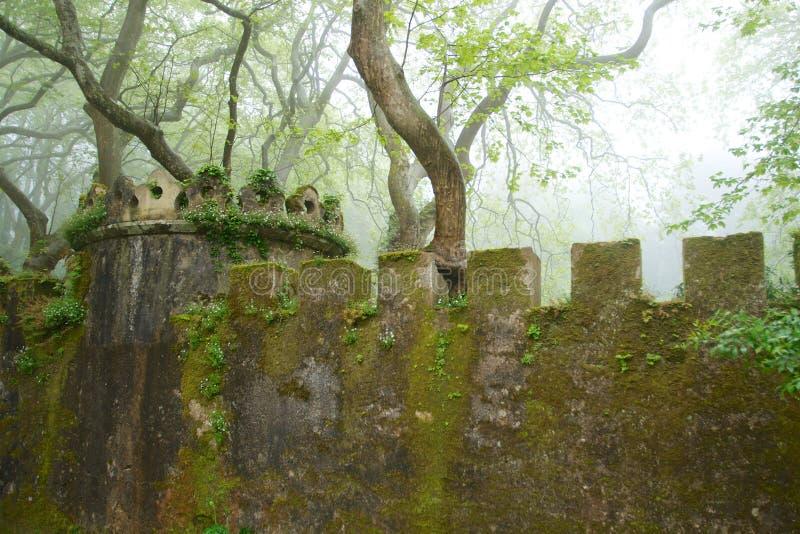Mossig vägg med tornet i en dimmig skog royaltyfria foton