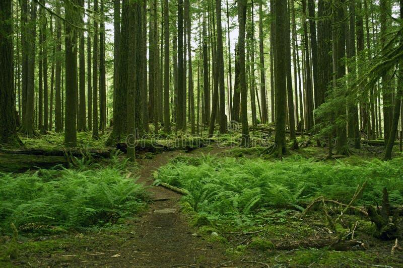 Mossiga Forest Scenery arkivfoton